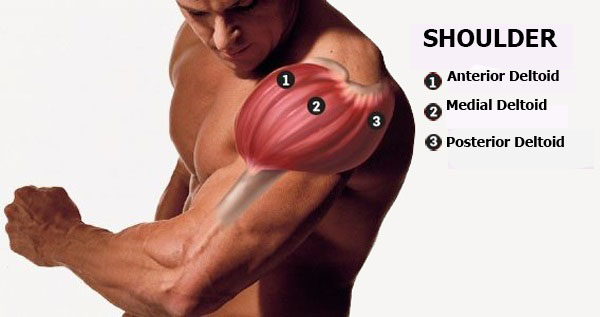 Man with three head of shoulder muscles| Shoulder workouts gym  Ultimate Shoulder Exercises Gym | Shoulder Workout Gym For Mass shouldr muscles  Ultimate Shoulder Exercises Gym | Shoulder Workout Gym For Mass shouldr muscles